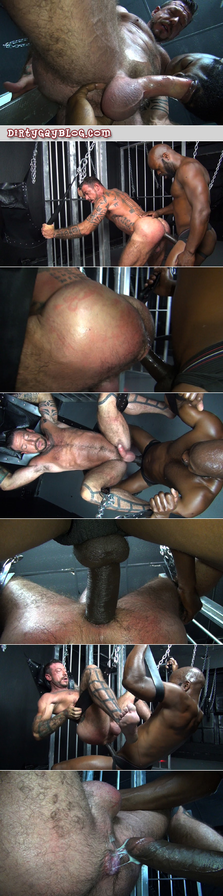 Tattooed muscle bear being fucked bareback in a sling by a black man with a huge penis.