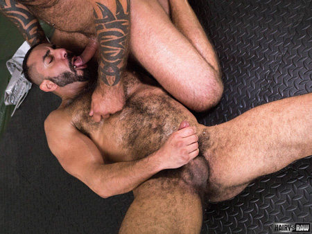 Extremely hairy Middle Eastern muscle bear sucking the cock of a heavily tattooed Daddy bear.