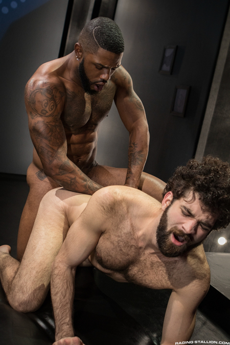 Fit, hairy otter getting fucked doggy-style by a tattooed, muscular black man.